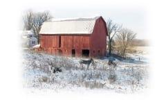 donkey-barn