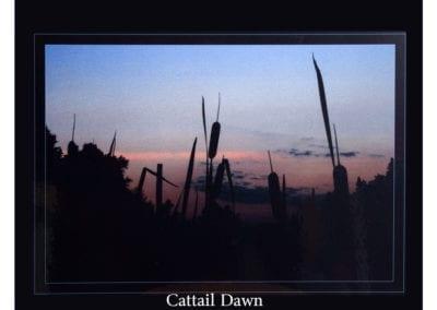 Cattail Dawn